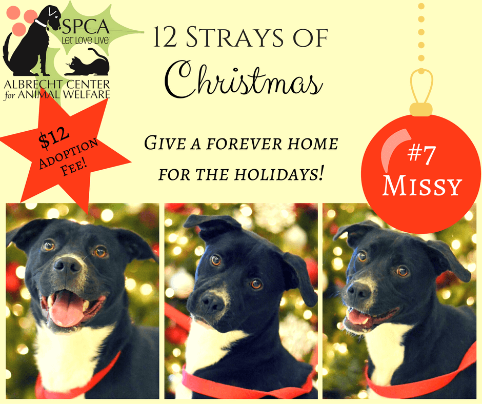 12 strays of christmas flyer