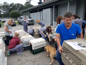 transporting hurricane dogs