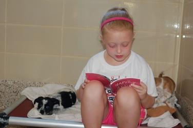 junior volunteer reading to puppies