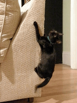 cat crawling up a couch