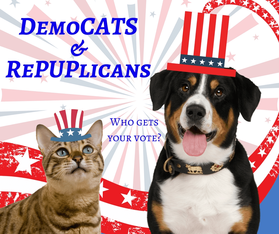 dog and cat with democrat and republican hats