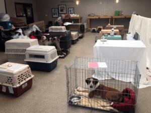 hurricane dogs housed in education center