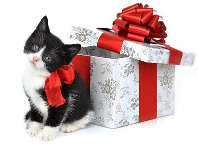 cat next to a gift box