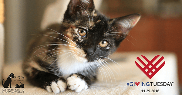 cat with giving tuesday logo
