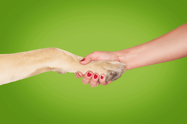dog and woman shaking hands