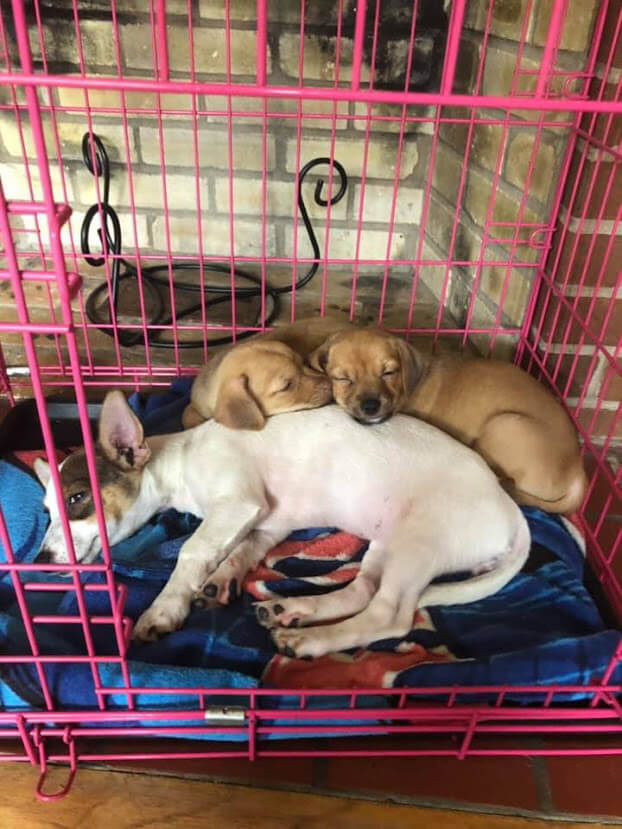 dogs sleeping together in a crate
