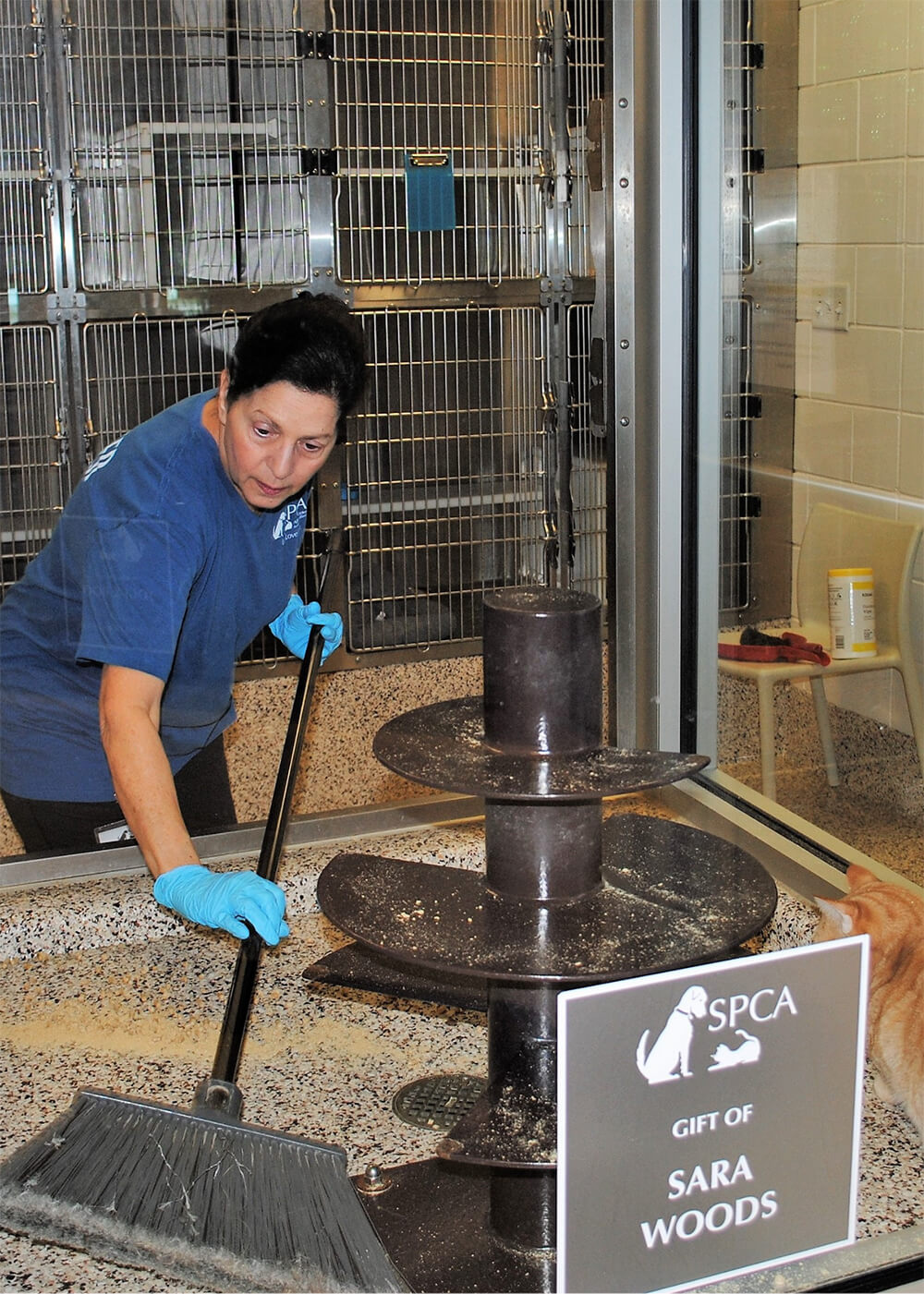 volunteer cleaning a cage