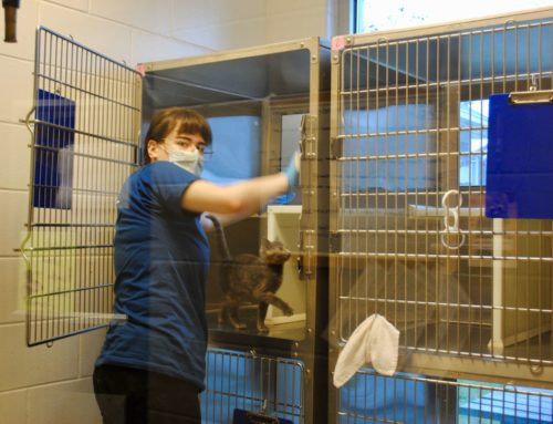 A Day in the Life of a Shelter Animal Caretaker