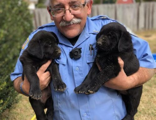 A Day in the Life of An Animal Control Officer