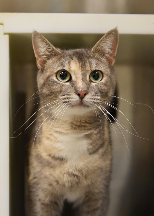 Cat of the Month Names Sunny