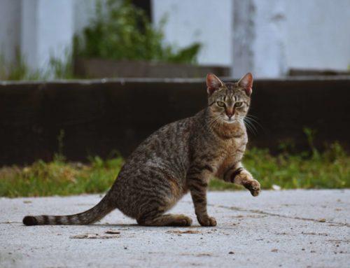 A Shelter Cat's Story