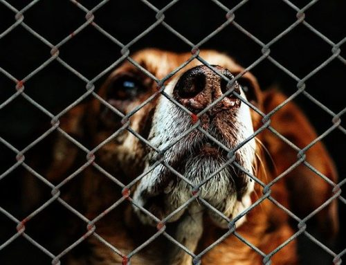 A Dog's Journey Through the Shelter