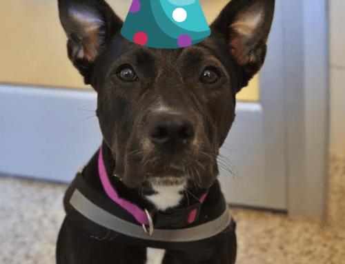Happy Birthday, Shelter Pups!
